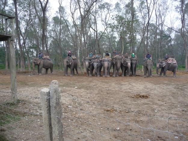 Safari elephants