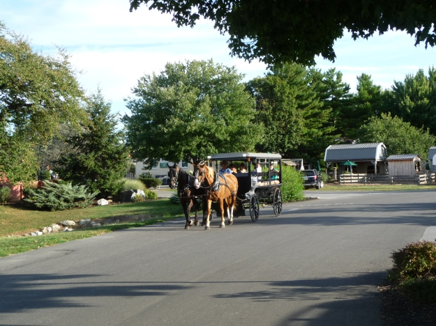 An old-fashioned Buggy Ride.