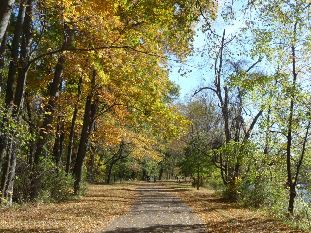 A walk in the Fall woods