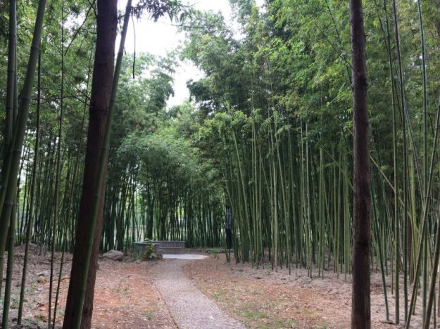 Bamboo grove, a tranquil spot